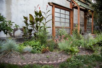 Home rain garden installation, full of lush, green vegetation and framed by bricks.